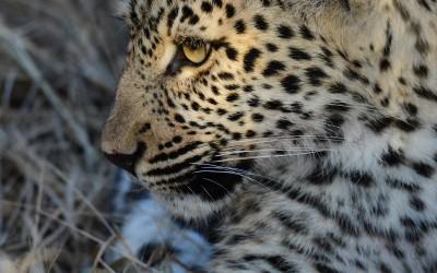Mal-D-Africa-Itineraries-SA-Malaria-Free-Gallery-04