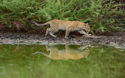 Mal-D-Africa-Parks-Central-Kalahari-gallery-02