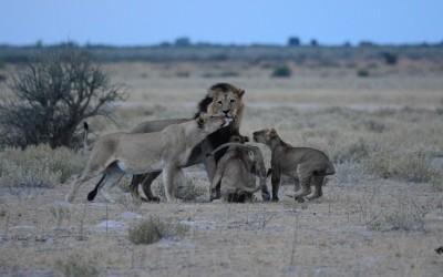 Mal-D-Africa-Parks-Central-Kalahari-gallery-05