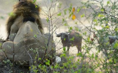 Mal-D-Africa-Parks-Kruger-gallery-01