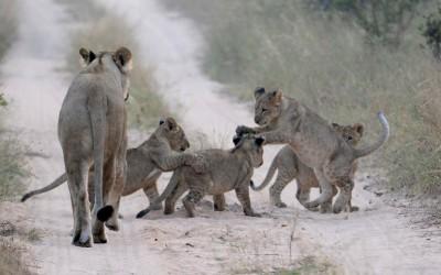 Mal-D-Africa-Parks-Kruger-gallery-03