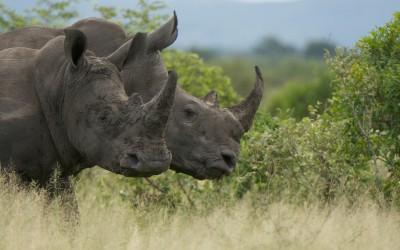 Mal-D-Africa-Parks-Kruger-gallery-04