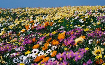 Mal-D-Africa-Parks-Namaqualand-gallery-02