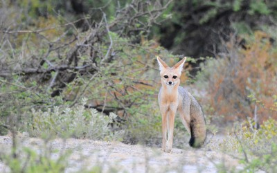 Mal-D-Africa-Parks-Namaqualand-gallery-04