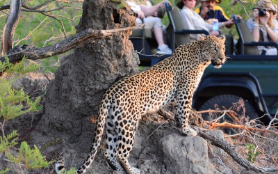Mal-D-Africa-Parks-Private-Game-Reserve-gallery-01