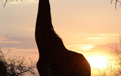 Mal-D-Africa-Parks-Private-Game-Reserve-gallery-04