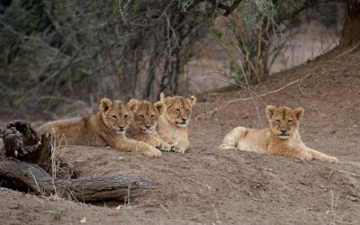 Mal-D-Africa-Parks-Private-Game-Reserve-gallery-05