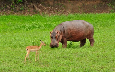 Mal-D-Africa-Parks-iSimangaliso-gallery-02