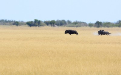 Mal-D-Africa-Countries-Botswana-gallery-19