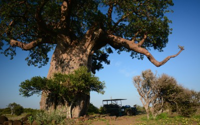 Mal-D-Africa-Countries-Botswana-gallery-20