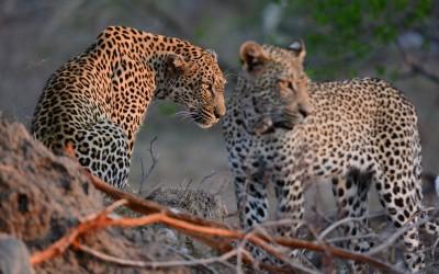 Mal-D-Africa-Itineraries-Beautiful-SA-Gallery-07