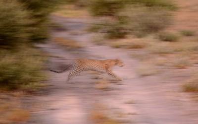 Mal-D-Africa-Itineraries-Botswana-Kalahari-Gallery-01