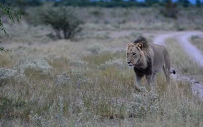 Mal-D-Africa-Itineraries-Botswana-Kalahari-Gallery-02