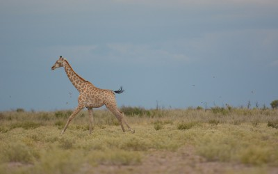 Mal-D-Africa-Itineraries-Botswana-Kalahari-Gallery-03