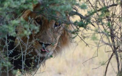 Mal-D-Africa-Itineraries-Botswana-Kalahari-Gallery-10