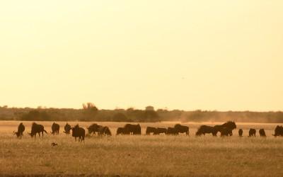Mal-D-Africa-Itineraries-Botswana-Kalahari-Gallery-11