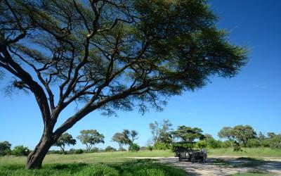 Mal-D-Africa-Itineraries-Northern-Botswana-Gallery-03