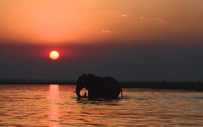 Mal-D-Africa-Itineraries-Northern-Botswana-Gallery-06