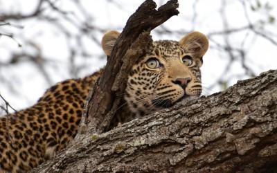 Mal-D-Africa-Itineraries-Northern-Botswana-Gallery-10
