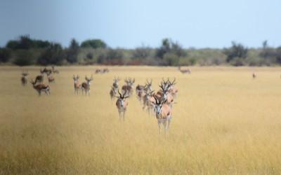 Mal-D-Africa-Parks-Central-Kalahari-gallery-06
