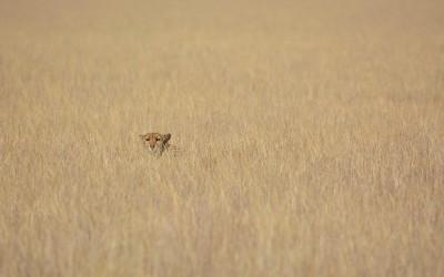 Mal-D-Africa-Parks-Central-Kalahari-gallery-07