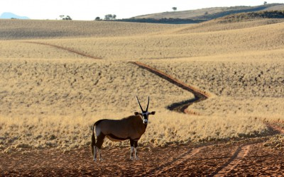 Mal-D-Africa-Itineraries-Namibia-The-best-of-gallery-02