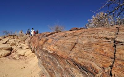 Mal-D-Africa-Namibia--Parks-Damaraland-Kaokoland-gallery-04