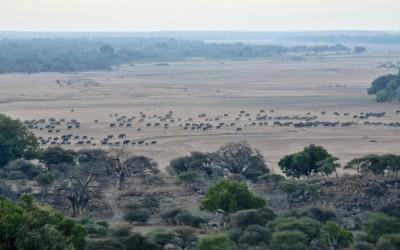 limpopo migration